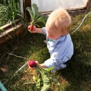New Mama Wellness backyard garden radish