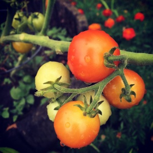healthy fresh whole foods cherry tomato