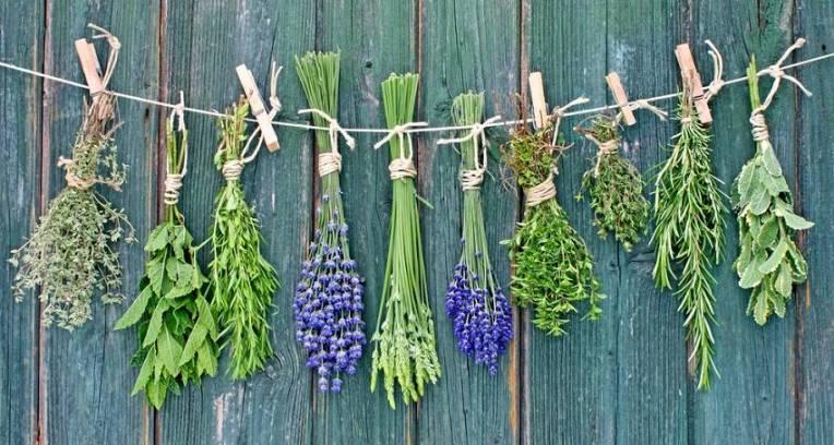 essential oil, medicine. plant, herbs